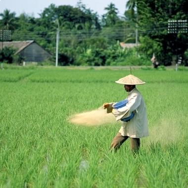 Nährstoffreich: Unsere Spezialisten wissen, welche Nährstoffe in den richtigen Mengen zum richtigen Zeitpunkt einzusetzen sind, um Ernteertrag und -qualität zu verbessern.