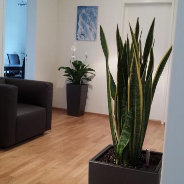 Unsere Büroräume in der Schweiz