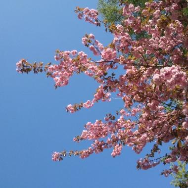 Frühling im Gewerbehof. Hinterhof-Flair!