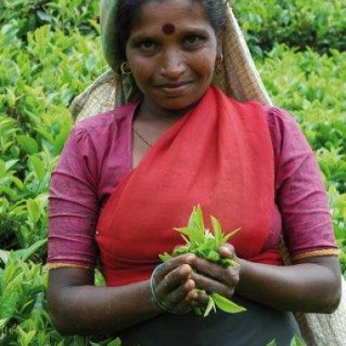 Sorgfältige Pflückung, hochwertige Verarbeitung und lückenlose Qualitätsprüfungen machen den Tee so besonders!