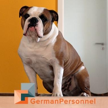 Duke – Unser Firmenhund