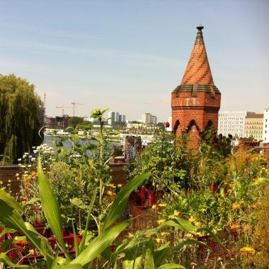 Urban Gardening auf unserer Dachterrasse