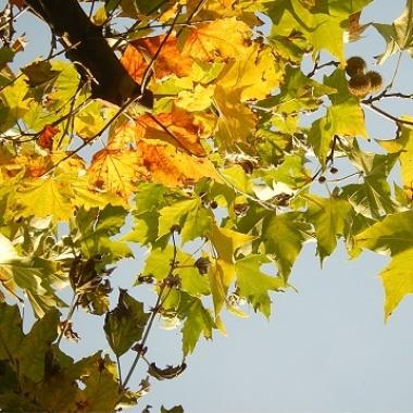 Die Herbstfarben dieser Blätter erinnern ein wenig an die DBS Farben.