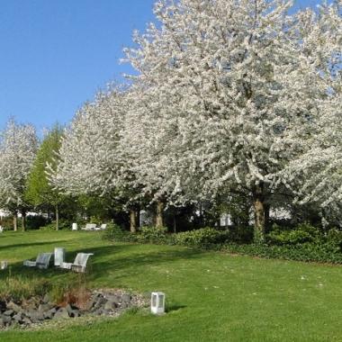 Der grüne SHD Büropark. Ideal für eine sonnige Mittagspause!