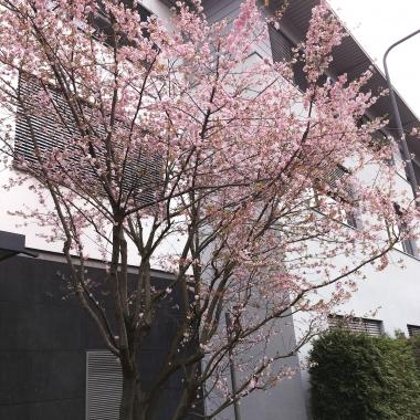 eWorks - Im Frühling sieht's sogar noch schöner aus!