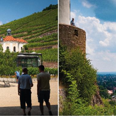 Sommerfest 2018: Wanderung in den Sächsischen Weinbergen