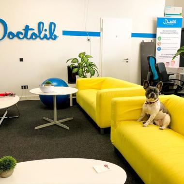 Das ist Trixi, unser flauschigstes Teammitglied im Berliner Office. Haupttätigkeiten: fressen, schlafen und mit den Kollegen spielen!