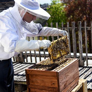 Unsere Volksbank-Bienen auf dem Dach der Ulmer Hauptstelle.