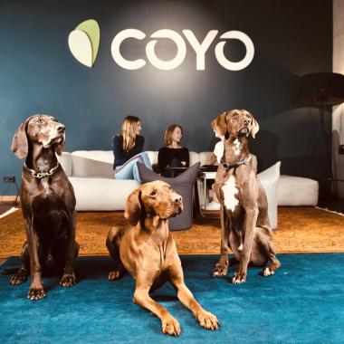 Unsere Bürohunde