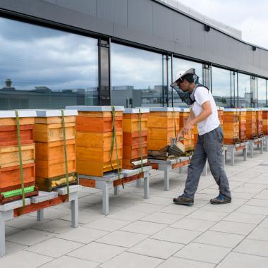 Eine Million Bienen auf dem Dach der UniCredit Bank Austria Unternehmenszentrale am Austria Campus angesiedelt