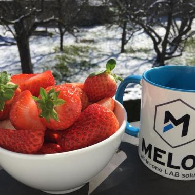Frühlingsgrüße á la MELOS