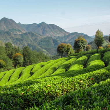 Teegarten - China