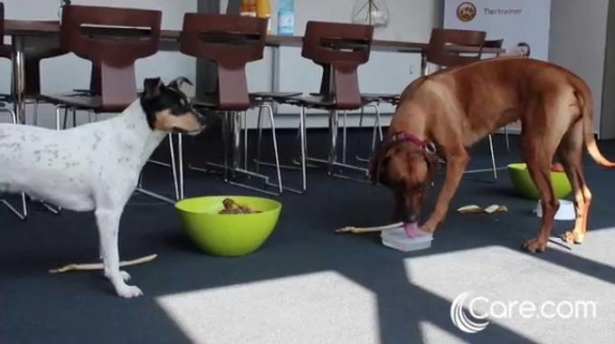 """Aktionstag """"Kollege Hund"""" bei Betreut"""