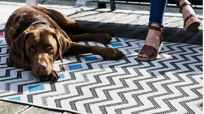 Take Your Dog To Work Day | benuta