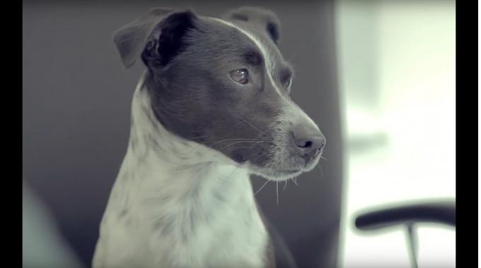 Ein Tag im Leben von Bürohund Janosch